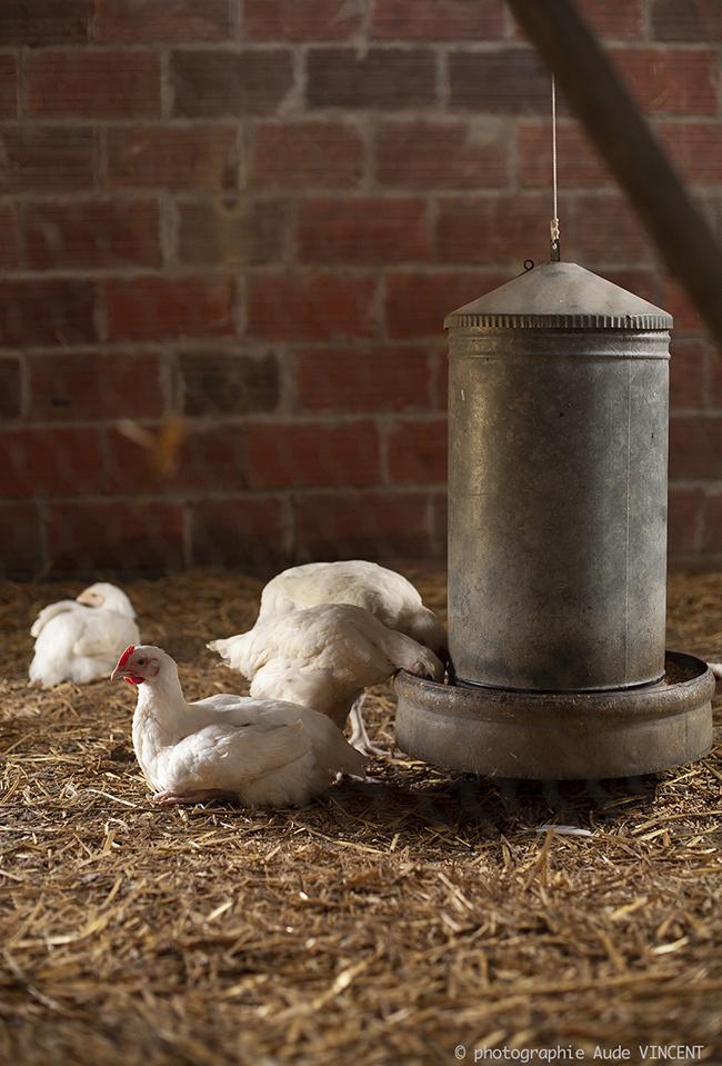 Farm Life reportage photographie à la ferme. Photographie Aude VINCENT