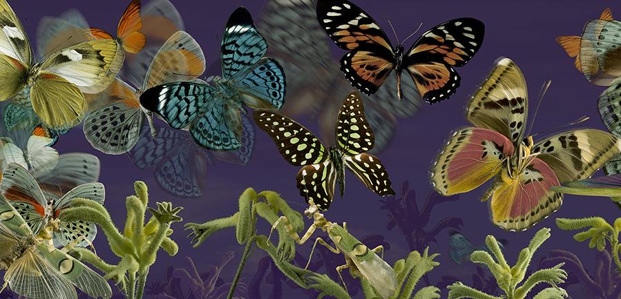 Décors_Textile_Papillons fond violet