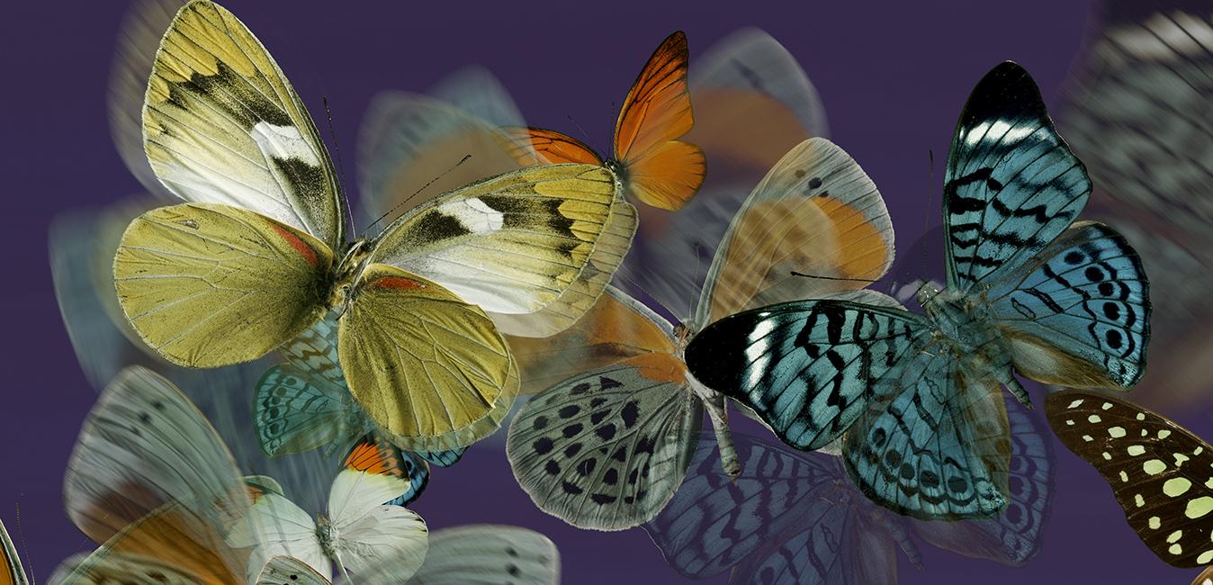Décors_Textile_01_Papillons APL copie 1