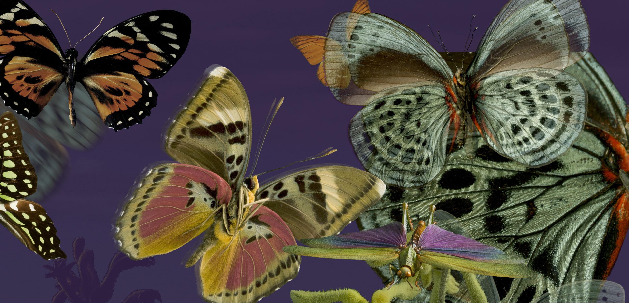 Décors_Textile_01_Papillons APL copie 2