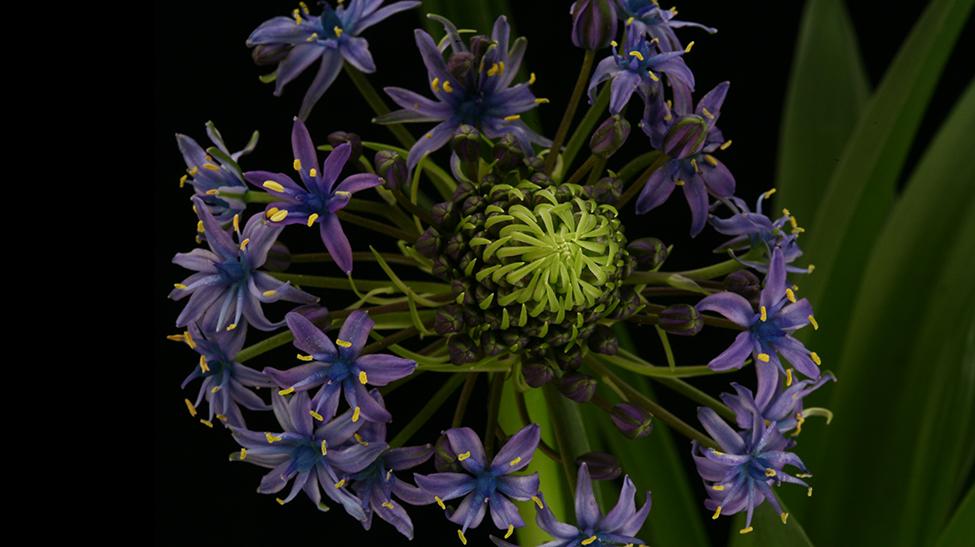 N_NA_20002_Plantes_Fleurs_Marche Rungis_179